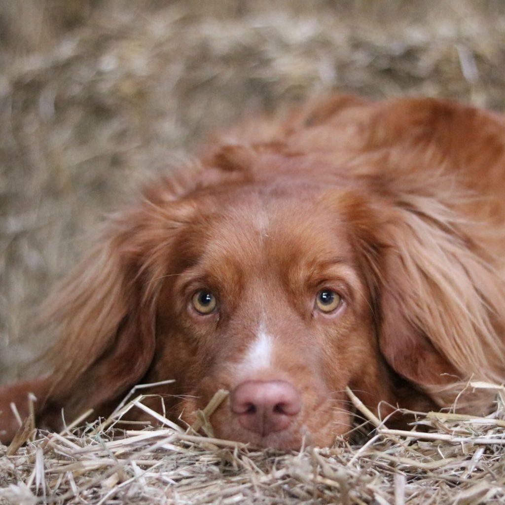 Bink de hond van boerderijcoaching